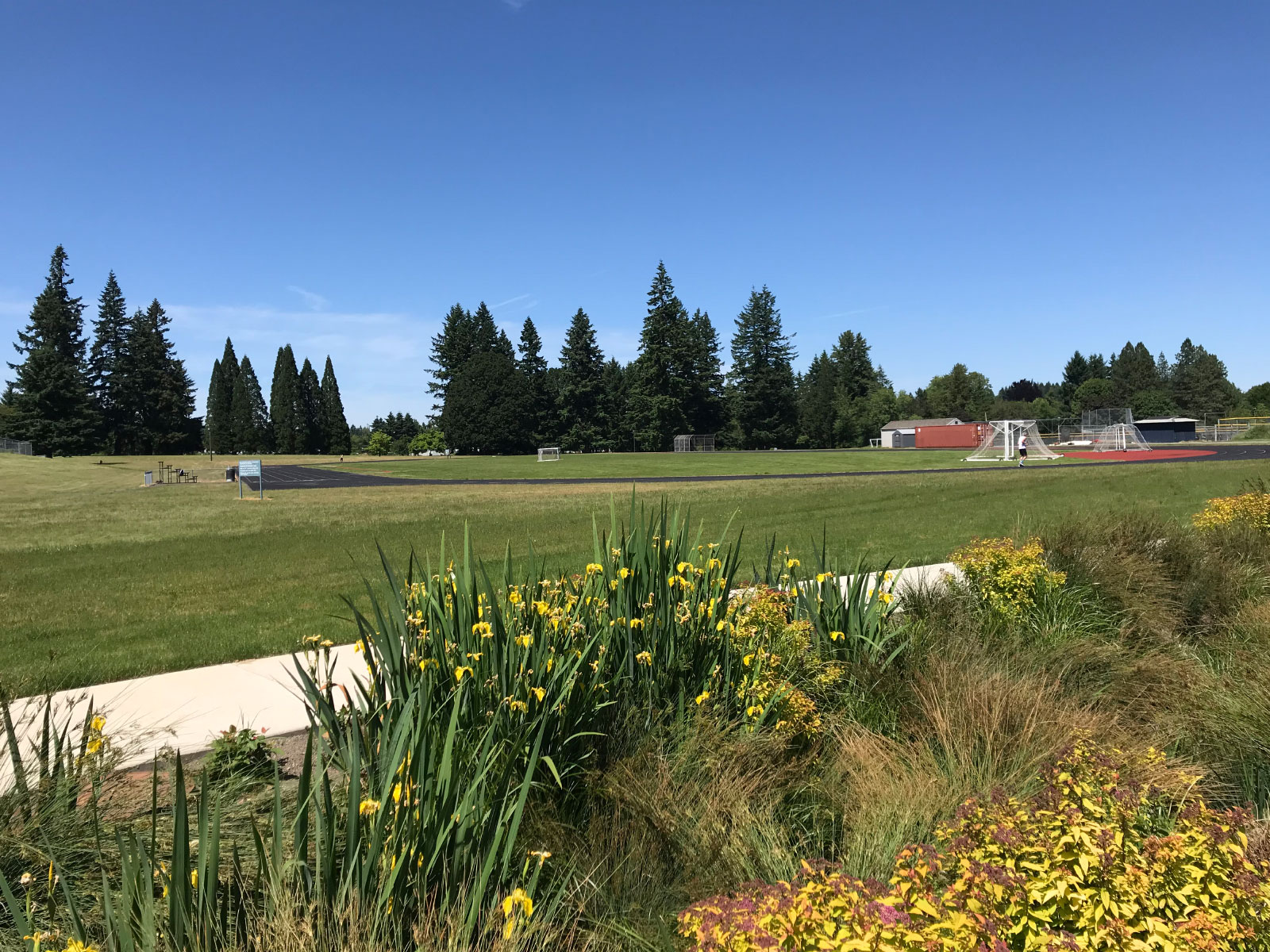 A set of yellow flowers and grass in front of the field and running track on the Oregon City campus
