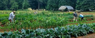 Organic Farming CC