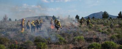 Wildland Fire Forestry